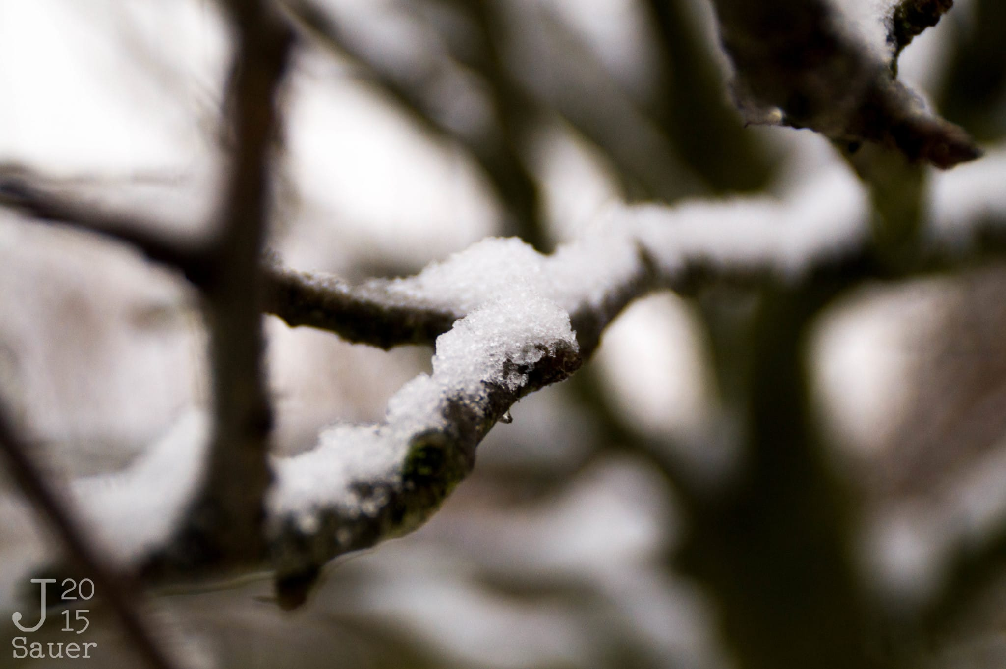Frozen branche