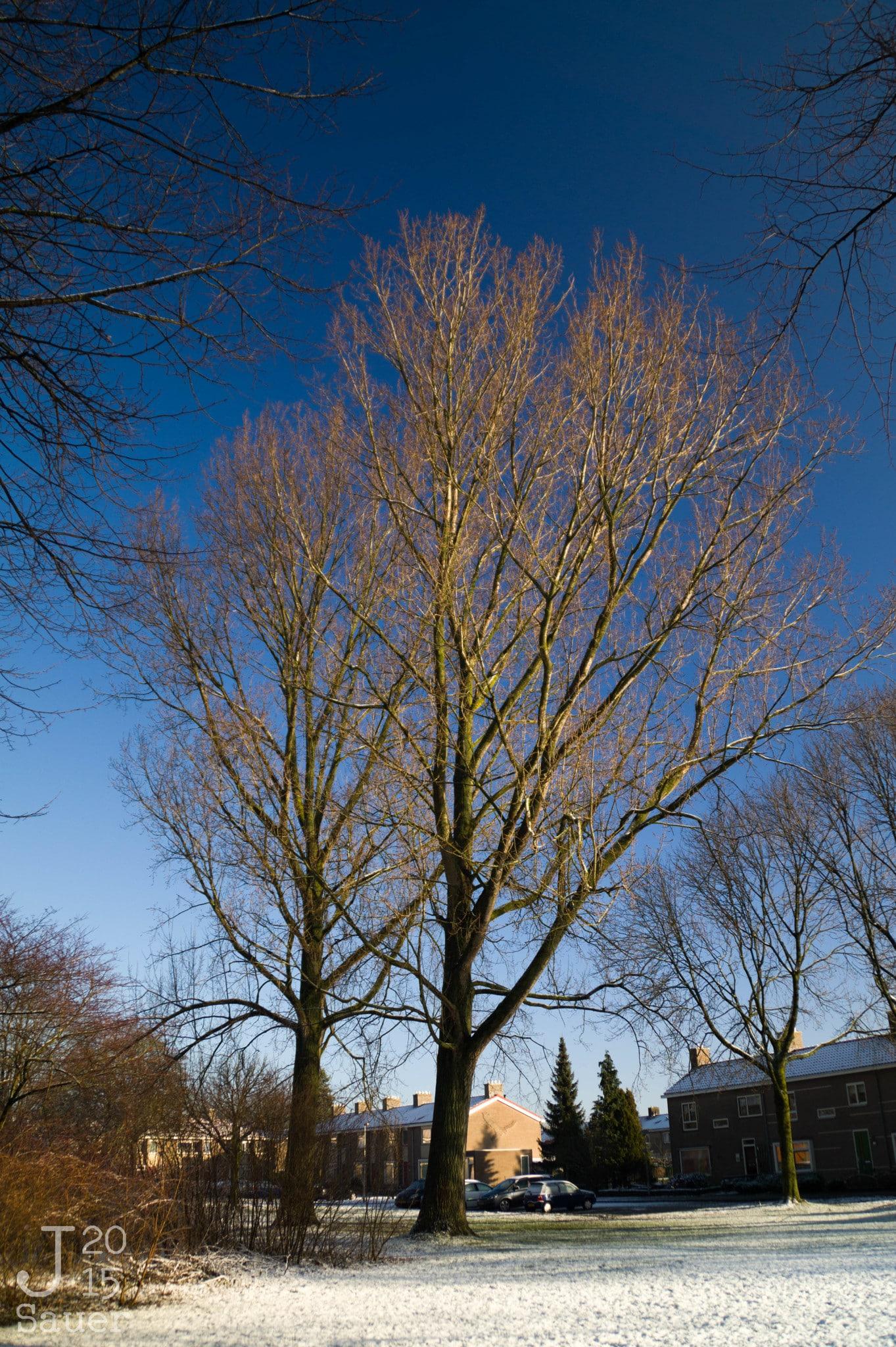 Bomen in de winter