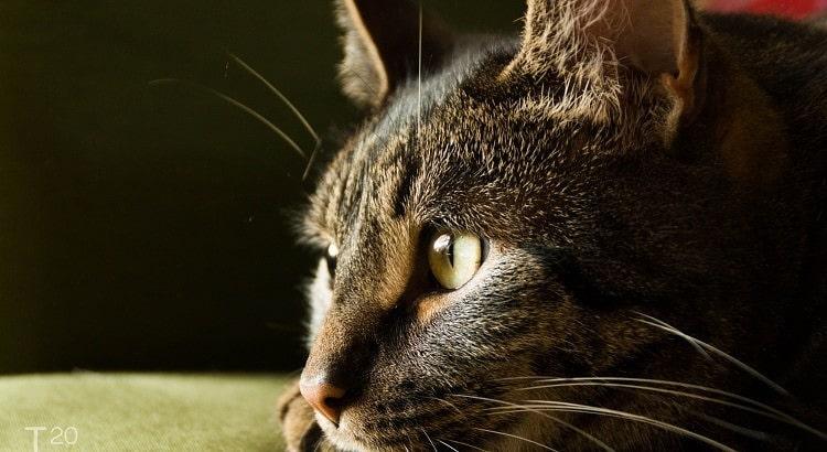 Onze kat Bliss