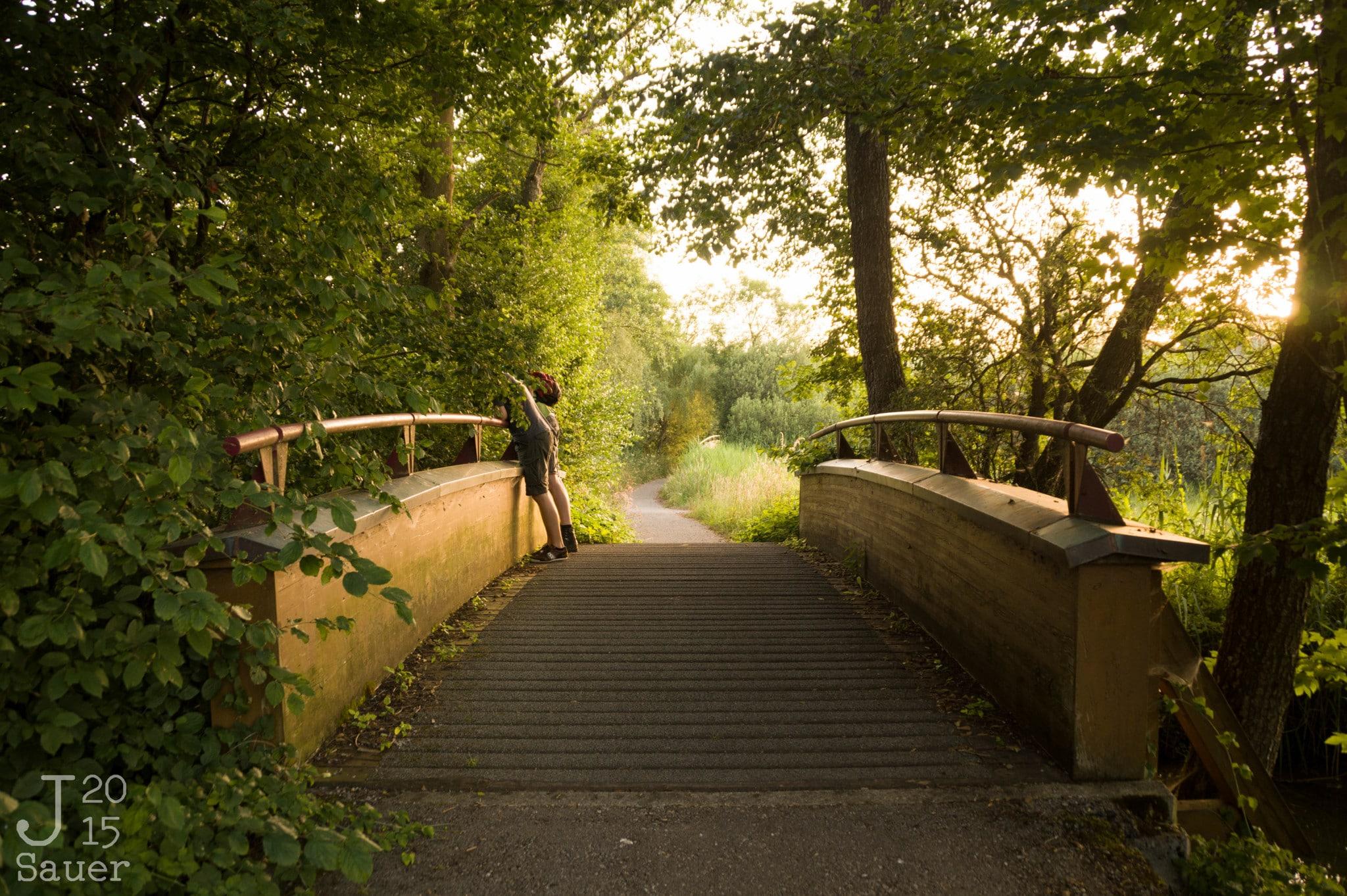 Bridge in the golden hour