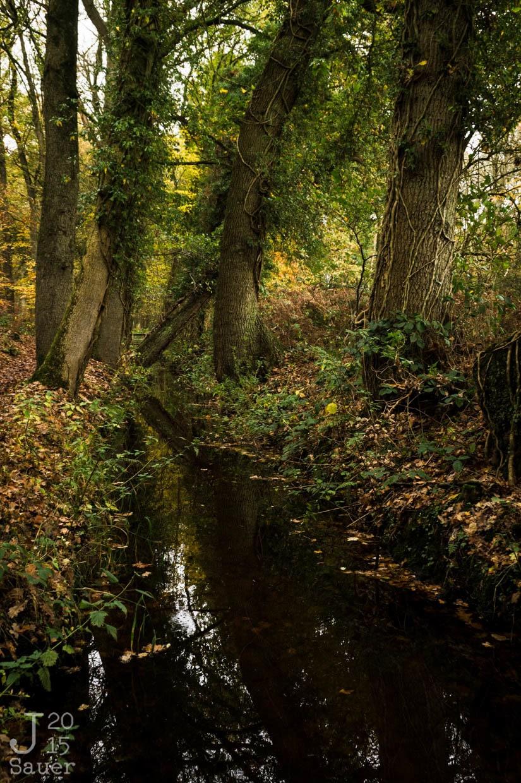 Landgoed Staverden Ermelo herfst