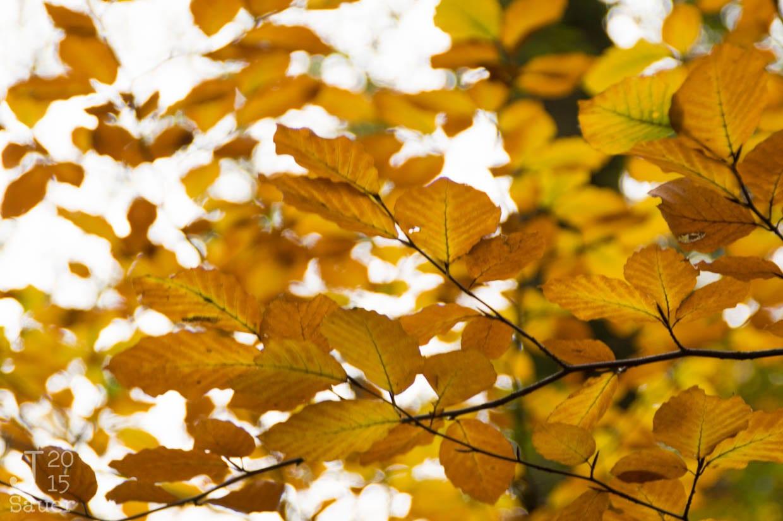 Landgoed Staverden Ermelo herfstbladeren