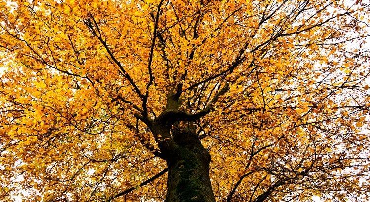Landgoed Staverden Ermelo boom in de herfst