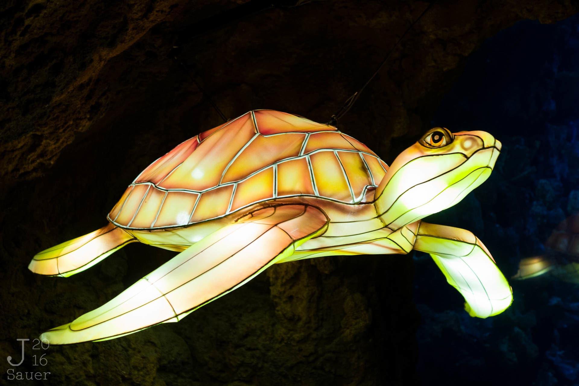 Lichtgevende schildpad