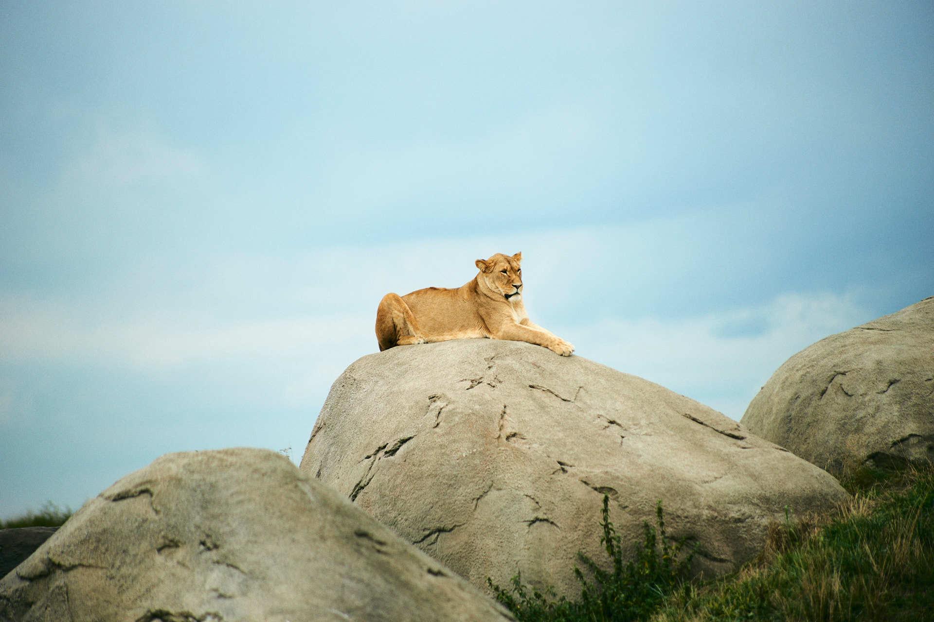 Wildlands leeuwin