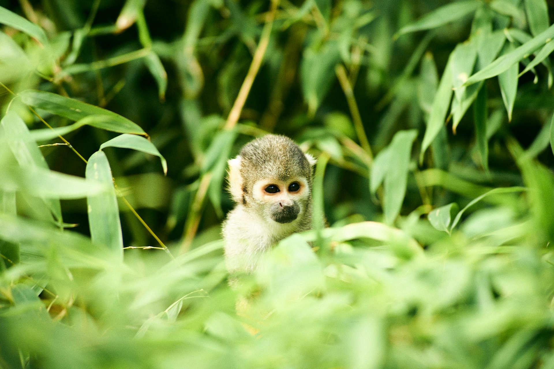 Wildlands aap